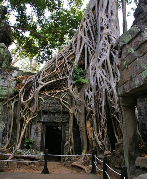 The incredible trees in Angkor Wat that feature in the Tomb Raider movie